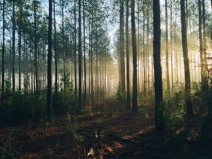 State parks have always been one of the most popular Florida attractions.