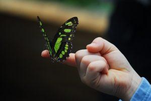 Butterfly on a kid's finger.