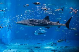 Watching water animals is a family fun in South Florida that you can't miss.