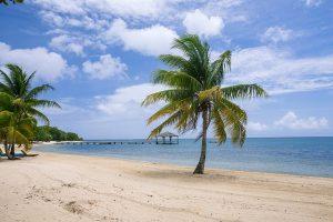 Palm trees on a sandy beach.