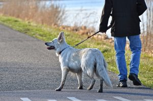 Man walking his dog as one of the ways of helping pets adjust to a new home
