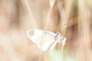 White moth on brown grass.