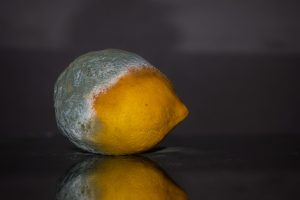 Moldy lemon as a sign that handling mold in your home requires more work