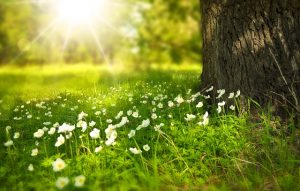 Spring, this is one of the best parts of the year for selling your old home