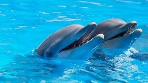 Dolphins, see these in Sea World Orlando one of the best theme parks in Orlando