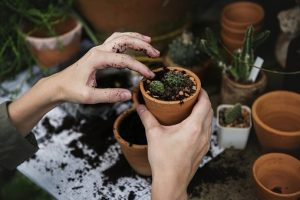 houseplants are one of the items you shouldn't store