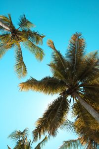 Things to do for fun in Bradenton FL- palm trees