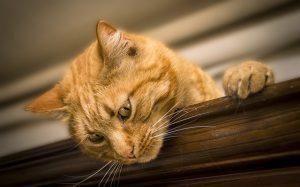Cat on a closet