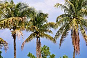 Palm treas