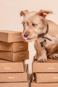 A dog and boxes