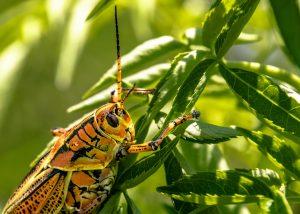 A bug on a leaf