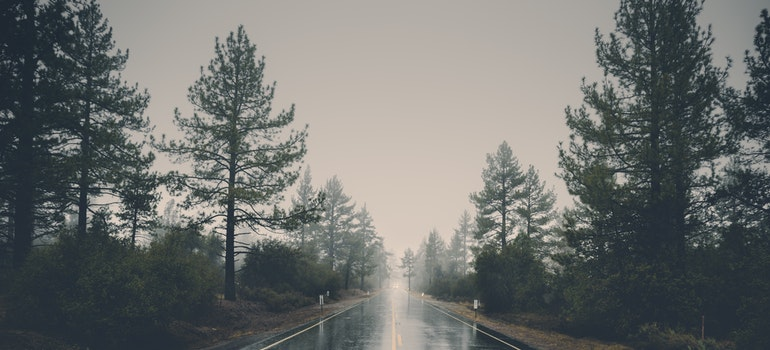 A road between pine trees