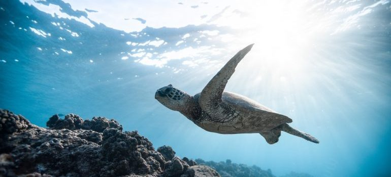 a turtle swimming in the ocean