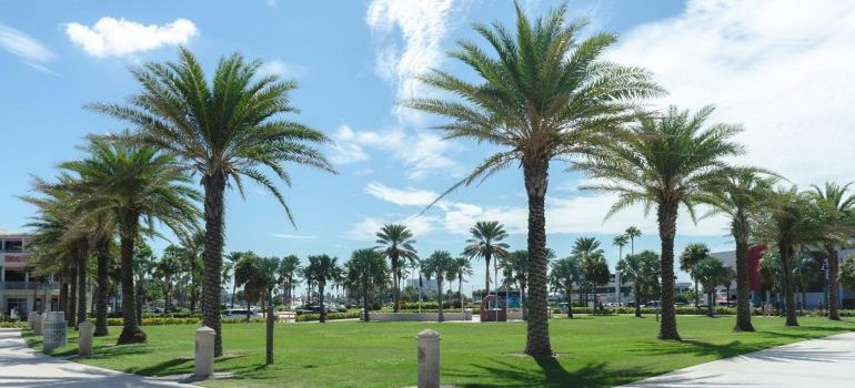 A park - Moving from Pompano Beach to Kendall