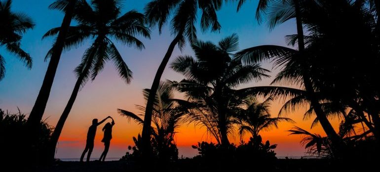Silhouettes of a couple among palm trees.
