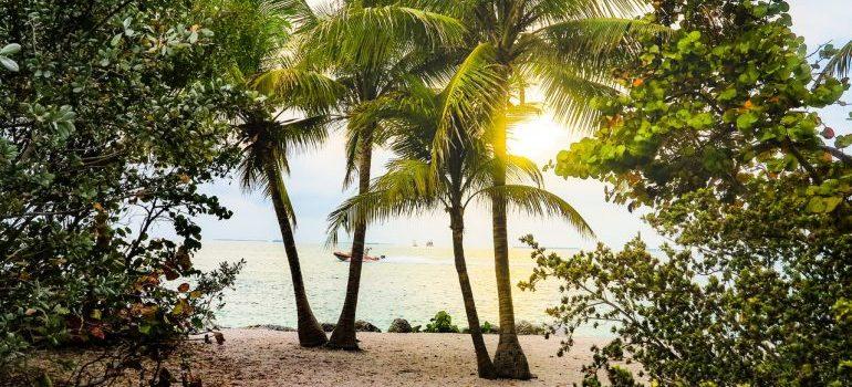 A view of a Florida beach through palm trees.
