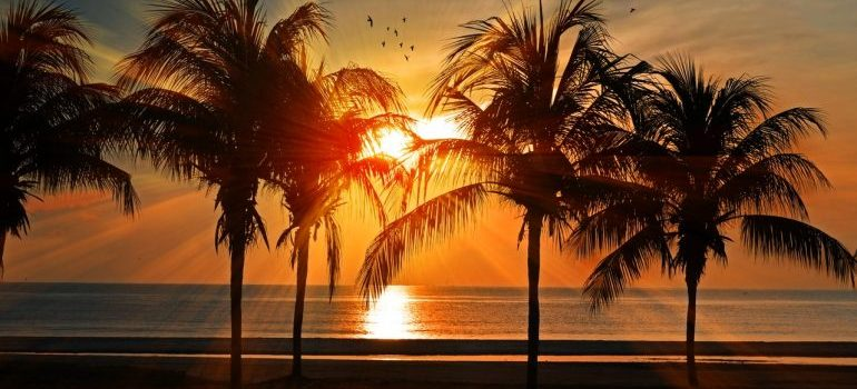 Silhouette of Palm Trees.
