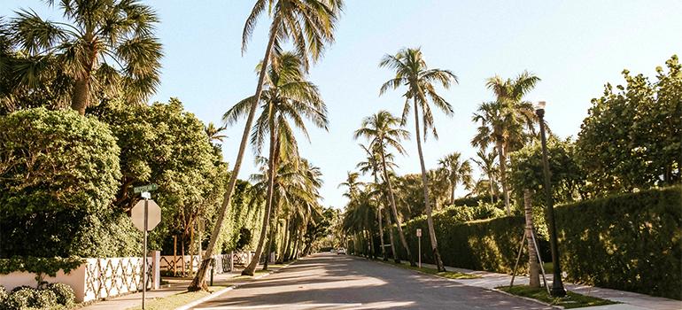 Street in Palm Beach