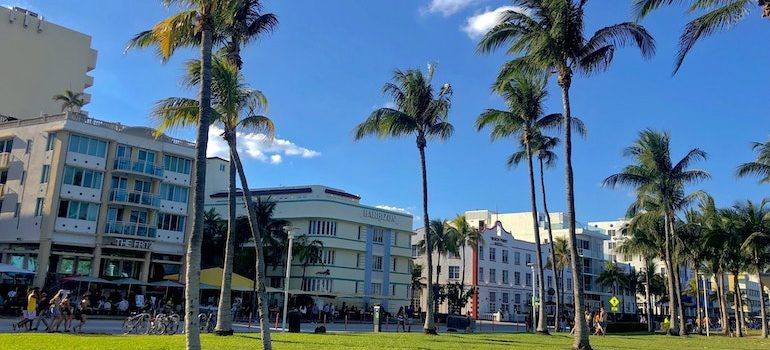palm trees and buildings