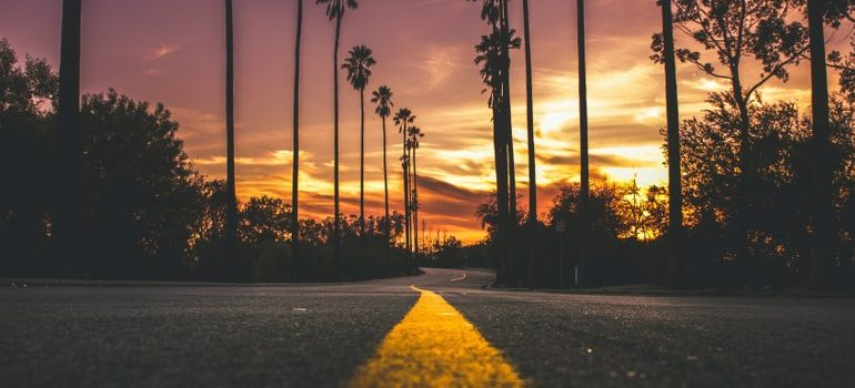 palm-lined road