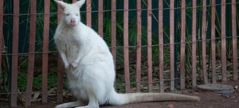 moving from Hialeah to Tampa will provide opportunities to visit the zoo and see this albino kangaroo