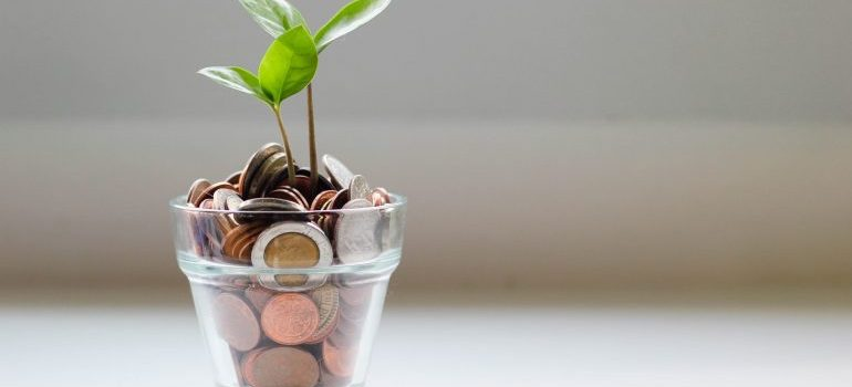 coins in the glass with a plant